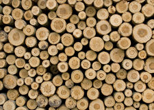 Piled up logs royalty free stock image