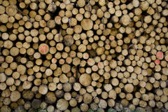 Piled up logs Stock Photo