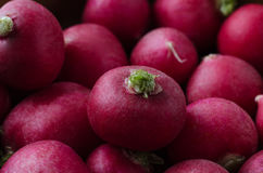 Piled Up Radishes - Close Up. Close up (macro) of red radishes, piled up and filling frame with green stalks visible. Dark lighting Royalty Free Stock Image