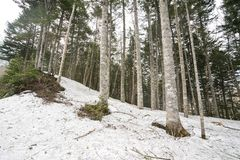 Piled up snow and forest. Piled up snow with mixed forest of conifers and hardwood trees in Katashina-mura, Gunma Royalty Free Stock Photography