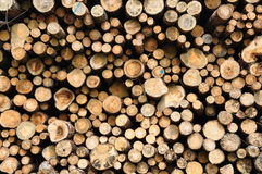 Piled up tree trunks. Dry firewood tree trunks piled up to a stack Royalty Free Stock Photography