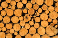 Piled up tree trunks. Dry firewood tree trunks piled up to a stack Royalty Free Stock Photos
