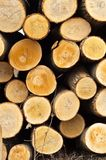 Piled up wooden logs. Texture stock photography