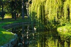 Pilen och den lilla sjön i Topcider särar först morgonljus arkivbilder