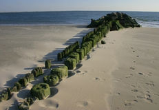 The piles of the aged mooring which acquired green algas on the Stock Photos