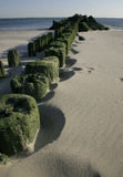 He piles of the aged mooring which acquired green algas on the beach Brighton Bich, the USA Royalty Free Stock Photos