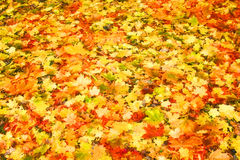 Piles of beautiful autumn Stock Photo