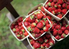 Piles of Berries. These beautiful, red, ripe strawberries are piled high at a rural farmer's market Stock Images