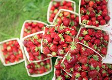 Piles of Berries. These gorgeous ripe strawberries are piled high on the grass at a rural farmer's market Royalty Free Stock Photos