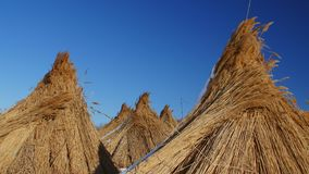 Piles of collected reed in the Danube Delta Stock Image