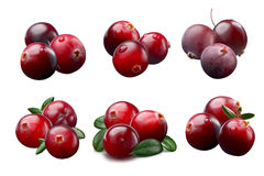 Piles of cranberries, paths Royalty Free Stock Photos