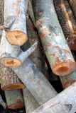Piles de bois Photos libres de droits