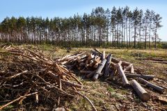 Piles de bois de chauffage dans la scierie Pile de bois de chauffage photo stock