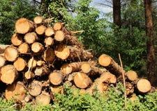 Piles de bois de construction Image stock