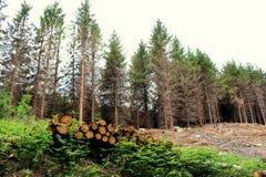 Piles de bois de construction Image libre de droits