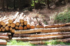 Piles de bois de construction Photographie stock libre de droits