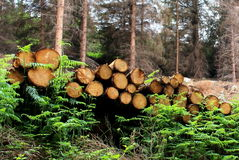 Piles de bois de construction Photos stock