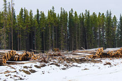 Piles de bois de construction coupé prêt à être transporté hors d'un secteur de notation images stock