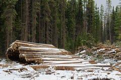 Piles de bois de construction coupé prêt à être transporté hors d'un secteur de notation image libre de droits