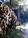 Piles de bois de construction dans le bois image libre de droits