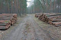 Piles de enregistrement de logarithme naturel de pin Photo stock