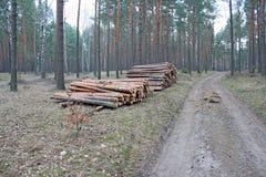Piles de enregistrement de logarithme naturel de pin Photographie stock libre de droits
