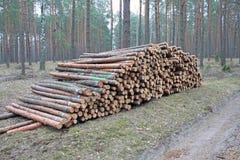 Piles de enregistrement de logarithme naturel de pin Images libres de droits