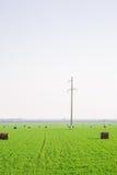 Piles de foin sur le champ vert Photo stock