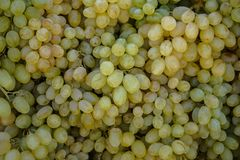 Piles of delicious fresh juicy seedless green grapes background in local city fruit market Stock Photo