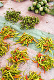 Piles des chilis en vente Photo libre de droits