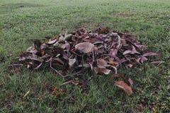 Piles des feuilles sèches au sol Photos stock