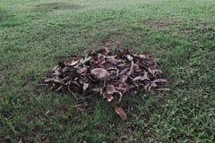 Piles des feuilles sèches au sol Photographie stock libre de droits