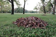 Piles des feuilles sèches au sol Image stock