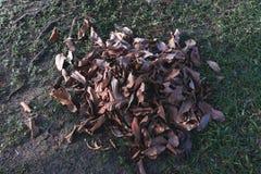 Piles des feuilles sèches au sol Photos libres de droits
