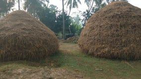 Piles des pailles sèches de riz photographie stock