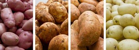 Piles des pommes de terre Image libre de droits