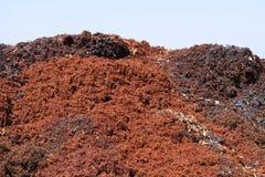 Piles des raisins écrasés photographie stock libre de droits