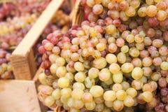 Piles des raisins Photos libres de droits