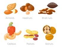 Piles of different nuts hazelnut almond peanut walnut cashew tasty seed vector illustration Royalty Free Stock Photo
