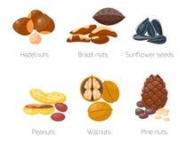 Piles of different nuts hazelnut almond peanut walnut tasty sunflower seed vector illustration Stock Photography