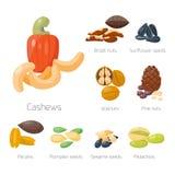 Piles of different nuts pistachio hazelnut almond peanut walnut cashew chestnut tasty seed vector illustration Royalty Free Stock Images