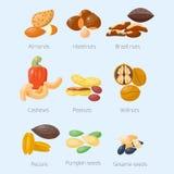 Piles of different nuts pistachio hazelnut almond peanut walnut cashew tasty seed vector illustration Royalty Free Stock Photography