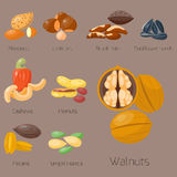 Piles of different nuts pistachio hazelnut almond peanut walnut cashew tasty seed vector illustration Royalty Free Stock Photos