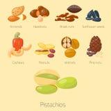 Piles of different nuts pistachio hazelnut almond peanut walnut cashew tasty seed vector illustration Royalty Free Stock Images