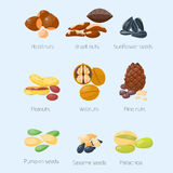 Piles of different nuts pistachio hazelnut almond peanut walnut tasty seed vector illustration Stock Photos