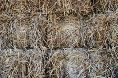 Piles of dry rice straw Royalty Free Stock Photography