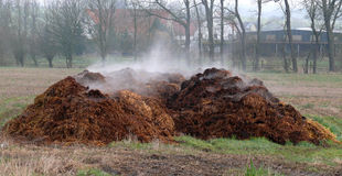 Piles of dung. Fresh horse Piles of dung Stock Photography