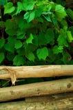 Piles en bois Photographie stock