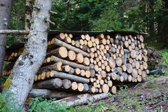 Piles of firewood royalty free stock photos