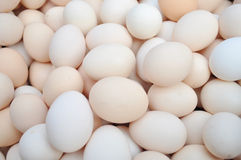 piles of fresh eggs Stock Photography